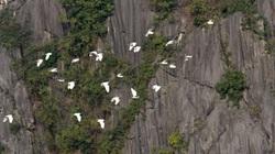 Việt Nam có khu bảo tồn thiên nhiên đầu tiên đạt chứng nhận Danh lục Xanh tại Đông Nam Á