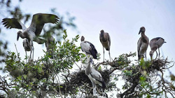 Đồng Tháp: 13 loài chim quý hiếm có nguy cơ tuyệt chủng là những loài chim gì?