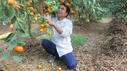 Hà Nội: Vốn Quỹ Khuyến nông đến tay, thành ngay... tỷ phú