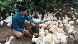Hội Nông dân Kim Bôi: Triển khai hiệu quả công tác dạy nghề cho hội viên