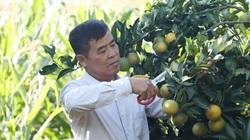 Lão nông chịu chơi, mua cá sông Đà về làm phân bón cho cây, thu bất ngờ lớn