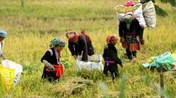 Người dân Lai Châu thu nhập hàng trăm triệu đồng từ sản xuất nông nghiệp
