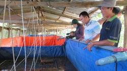 """An Giang: """"Liều"""" nuôi lươn không bùn công nghệ cao dày đặc trong 7 bể lót bạt, bắt toàn con to bự, nặng nửa ký/con"""