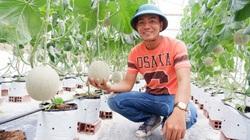 Bến Tre: Trai trẻ trồng dưa lưới Thái Lan ứng dụng nông nghiệp công nghệ cao, trái nào cũng đẹp, bán đắt hàng