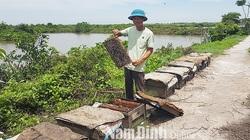 """Nam Định: Vùng đất dân đem ong vào vườn Quốc gia thả, làm ra thứ """"mật của biển"""" rất lạ miệng, lãi hàng trăm triệu"""