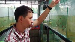 Bến Tre: Chàng nông dân bảnh trai nuôi 1 triệu con cá bảy màu mà làm giàu, mỗi tháng lời 50 triệu