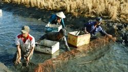 Diễn đàn tôm Việt 2020: Cần thương hiệu để nhận thấy sự khác biệt