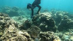 """Bình Thuận: """"Những chiến binh"""" lặn siêu giỏi mỗi ngày săn bắt hàng ngàn con đầy gai nhọn nguy hiểm này để làm gì?"""