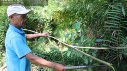 Quảng Ngãi: Đem loài cây rừng gai đâm tua tủa về nhà trồng, tưởng dở ngờ đâu thu nhập cực ổn