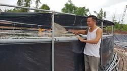Quảng Ninh: Kỹ sư tin học nuôi tôm công nghệ cao, ngay vụ đầu đã lãi 400 triệu đồng ở cái ao bé tý