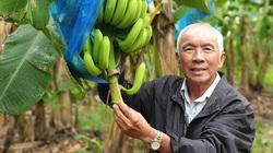 Thủ tướng Chính phủ đồng ý việc Hội Nông dân Việt Nam tổ chức kỷ niệm 90 năm ngày thành lập tổ chức này