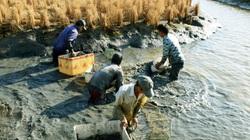 Mô hình canh tác lúa tôm ở ĐBSCL: Hướng đến làng, xóm hữu cơ