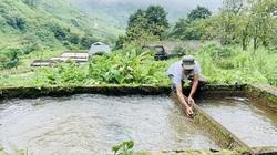 Kỳ lạ, nông dân be bờ đào ao lưng chừng núi nuôi thứ cá đặc sản bán đắt tiền ở Sa Pả, Sa Pa