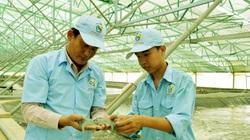 Bạc Liêu: Đáng mừng, 324 hộ nuôi tôm công nghệ cao, năng suất tăng hơn 10 lần so với nuôi tôm thông thường