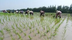 Trung Quốc có thể sẽ thiếu khoảng 130 triệu tấn lương thực trong 5 năm tới