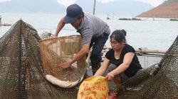 Hòa Bình: Thuận vợ thuận chồng nuôi cá lồng ra toàn con to