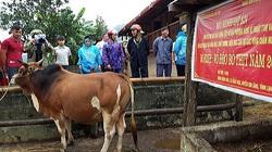 Vay vốn nhỏ nuôi bò to, nông dân tỉnh Lạng Sơn nhiều người say mê làm giàu, bỏ túi 200 - 400 triệu/năm