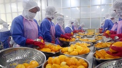 'Vị đắng' xuất khẩu trái cây tươi