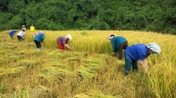 Hộ nông dân nghèo, cận nghèo được hỗ trợ 90% phí bảo hiểm nông nghiệp
