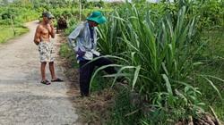 Quảng Nam: Kênh thủy lợi hàng trăm triệu đồng thành nơi chứa rác, trồng cỏ cho bò