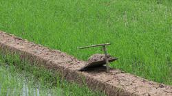 """Phục lăn nông dân tỉnh Đồng Tháp sáng chế ra cách bẫy chuột đồng """"siêu tiện lợi"""""""