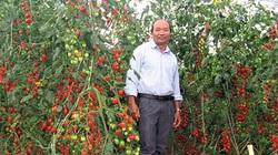Người tiên phong làm rau đạt chuẩn quốc tế Global GAP