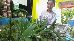 Lạ: Một loại rau dại đặc sản được tôn vinh sản phẩm nông nghiệp tiêu biểu của TP HCM
