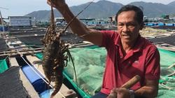 Khánh Hòa: Nhiều nông dân là tỷ phú, triệu phú nhờ làm điều này