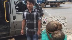 Lâm Đồng: Mới phạt một người gần 300 triệu, lại phát hiện tài xế vận chuyển động vật hoang dã