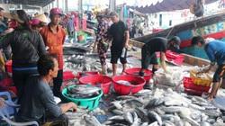 Cá nhiều, dầu rẻ, ngư dân hào hứng vươn khơi
