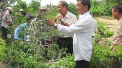 """Phú Yên: Nông dân biến đất cát """"chay"""" thành các vườn cây kiểng tiền tỷ"""