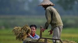 24 thương nhân không xuất khẩu gạo trong suốt 18 tháng có bị thu hồi giấy chứng nhận?