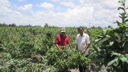 """Long An: Ở nơi này, """"đại gia"""" nông dân trồng thứ cây gì mà mới chỉ bán 210 gốc đã đút túi 12 tỷ đồng?"""
