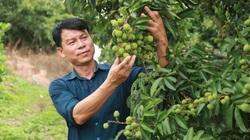 Bắc Giang: Đột phá như thế nào mà trở thành điển hình về tái cơ cấu nông nghiệp?