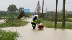 """Đến khổ, nông dân Đà Nẵng dầm nước mưa vội vã hái rau """"chạy lũ"""""""