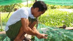 Nam Định: Kiếm hàng trăm triệu từ nuôi ốc nhồi