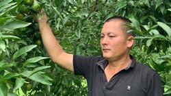 Cao Bằng: Leo lên núi lạc ngay vào rừng trồng thứ cây rất quen, nhưng ra trái to lạ thường