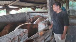 """Chật vật di dời chăn nuôi khỏi nội đô Hà Nội: Trở lại nơi đầu tiên """"nổ"""" dịch tả lợn châu Phi (Bài 1)"""