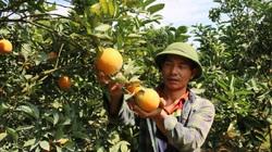 """""""Phao cứu sinh"""" giúp người Thái vùng cao thoát nghèo"""