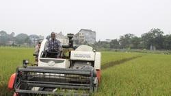 Nông nghiệp - trụ đỡ qua gian khó