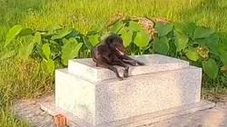 Clip nóng hôm nay: Cậu chủ qua đời đã 3 năm, chú chó trung thành vẫn ở cạnh mộ không rời nửa bước
