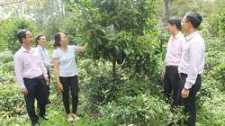 Lâm Đồng: Vườn trồng chôm chôm, măng cụt giúp nông dân khá giả