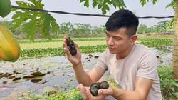 Hà Nam: Tròn mắt với ao nuôi ốc nhồi đặc sản của chàng nông dân 9X, nuôi như chơi mà lời nửa tỷ