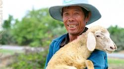 Nhiều tỉnh đã nuôi cừu, nhưng tỉnh nào nuôi nhiều con cừu nhất Việt Nam?