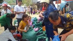 Thái Nguyên: Vùng đất này trồng những cây trám to cao, tới mùa hái trái đặc sản bán đắt tiền
