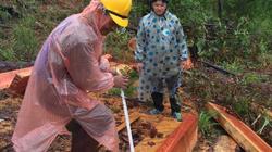 Lâm Đồng: Lại phát hiện vụ phá rừng nghiêm trọng, rộng hơn 2ha