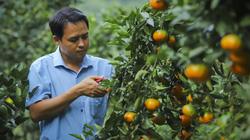 Nông nghiệp - trụ đỡ qua gian khó (bài cuối): Khát vọng xây dựng nền nông nghiệp hiện đại, hội nhập