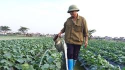 Sau chuyển đổi, đất Thái Bình có thêm nhiều triệu phú trồng rau an toàn