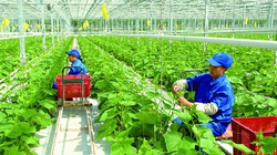 Lào Cai: Nông dân ở đây khá giả nhờ áp dụng nông nghiệp công nghệ cao