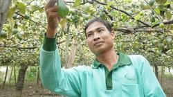 Ninh Thuận: Trồng táo trái ra la liệt, hái mỏi tay, bất ngờ hơn là nuôi thêm dê ăn lá táo, thu bộn tiền